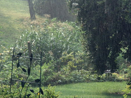 eat right: summer rain on corn patch, horizontal