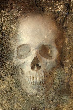 Skull Embedded in Rock