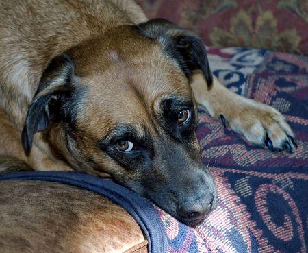 Expressive Dog Eyes