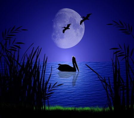 Pelicans silhouetted on a serene moonlit shore Archivio Fotografico