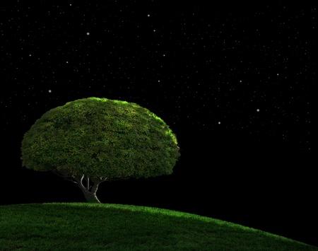 별이 빛나는 밤하늘 아래 잔디 언덕에 고독한 나무 스톡 콘텐츠
