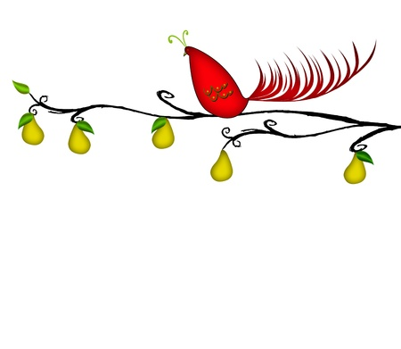 whimsical: Christmas illustration of a colorful partridge in a pear tree isolated on white
