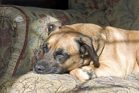 Portrait of a handsome dog with a sad or tired expression Stock Photo