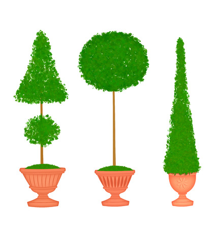 clipped: Three pretty clipped topiaries in clay urns