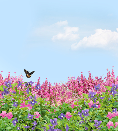 Field of beautiful pansies, violets, and coral bells under a sunny sky with a butterfly Stockfoto