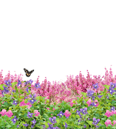 Field of beautiful pansies, violets, and coral bells with a butterfly