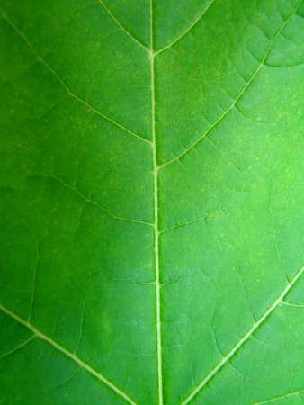 Close-up on a Green Leaf