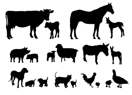 Farm Animals met Babies