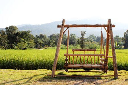Rice field in Thailand background