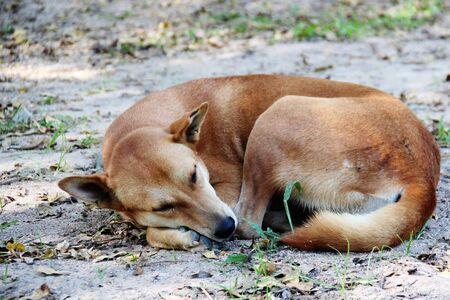 Dog Thai background. Imagens - 89346836