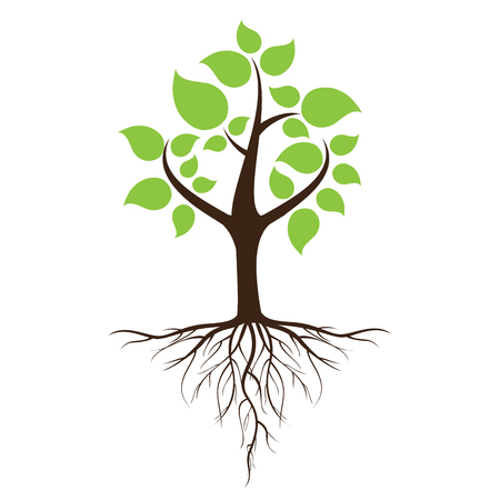 Green leafy tree with roots With trees isolated from white background. Illustration