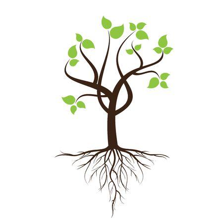 흰색 배경에서 격리하는 나무와 뿌리와 녹색 잎이 많은 나무.