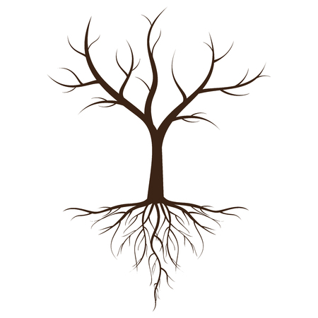 Dead tree with roots against a tree isolated from a white background.