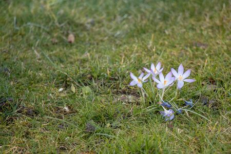 Purple Flowers in Grass Field photo
