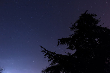 Pine Silhouette in Starry Night Cambridge photo