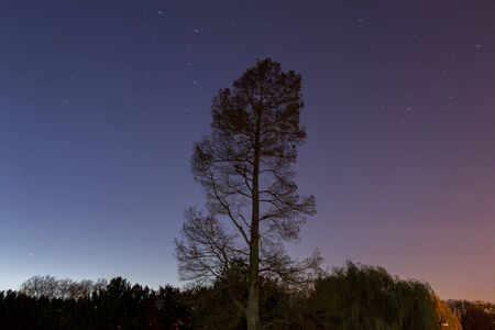 star trail: Stand-alone Tree and Star Trail background