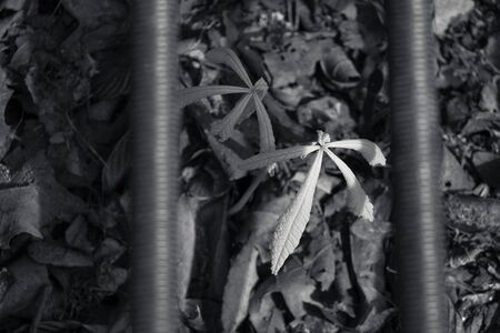 underneath: Plant growing underneath a metal Cage (Black and White) Stock Photo