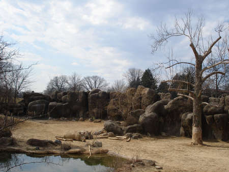 Sleeping Rhinos                             photo