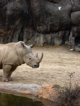 Rhino by the Water 版權商用圖片
