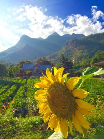 shiny: Natural scene in Chiangdao district, Chiangmai Thailand Stock Photo
