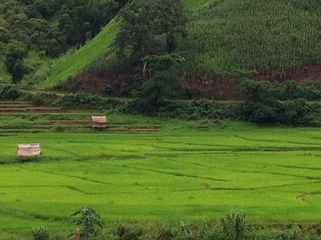 small town life: Small house in the rice field outside Nan province in Thailand