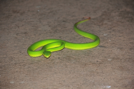 slither: a close-up of an green mamba