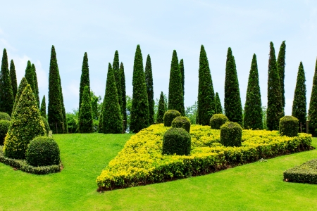 Landscaping in the garden  photo