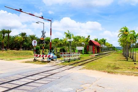 Railway line passing through the green plants Stock Photo - 21805197