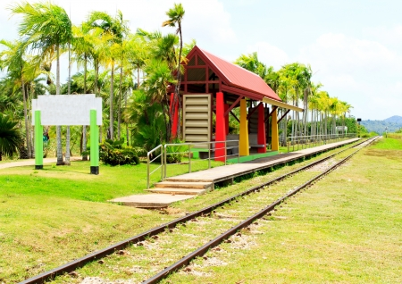 Railway line passing through the green plants  photo