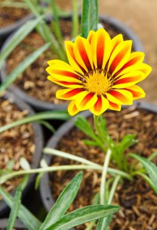 Flower in garden  photo