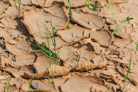 Plant struggling for life at drought land photo