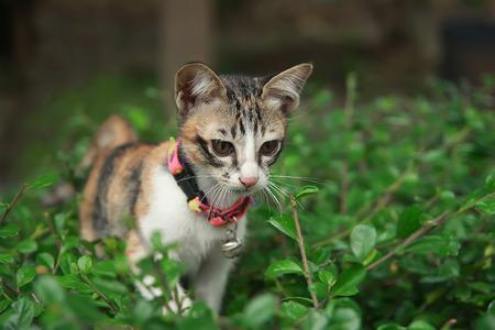 cat walk: Kitten baby cat walk on tree in garden