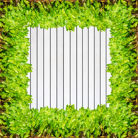 background green: Wood texture background plank panel timber and green plant Caladium frame.