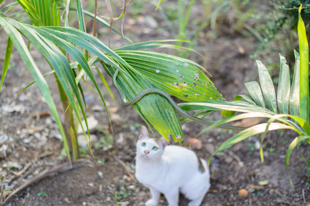 untidy: White cat fight green snake in untidy dirty garden, danger. Stock Photo