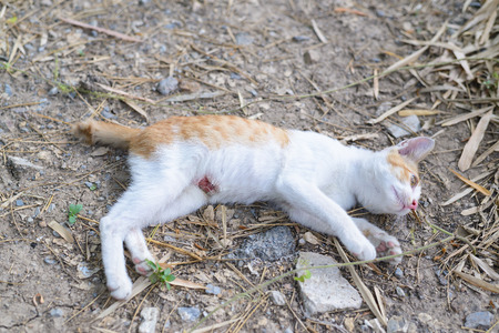 wounded kitten,injured little cat with lesion at the body stay on the ground, focus at the wound photo