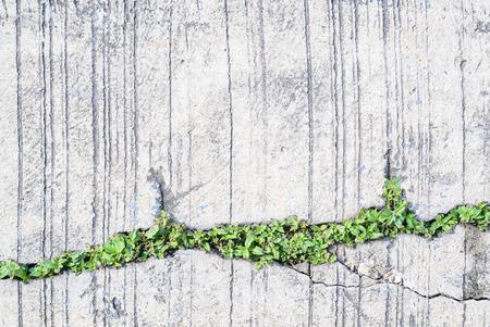 Tree growing on the crack concrete floor.