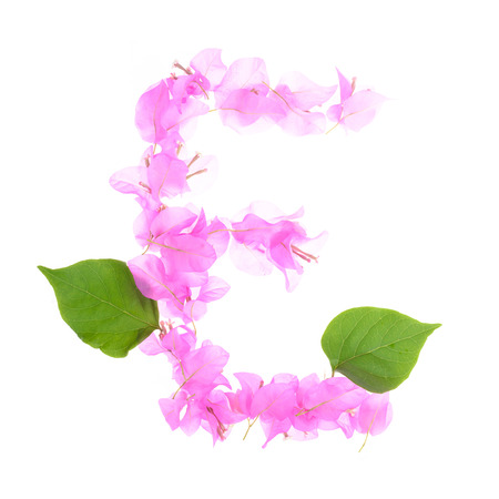 e pretty: Bougainvillea flowers alphabet isolated on white background Stock Photo