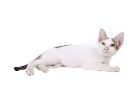 frisky: kitten isolated on a white background.