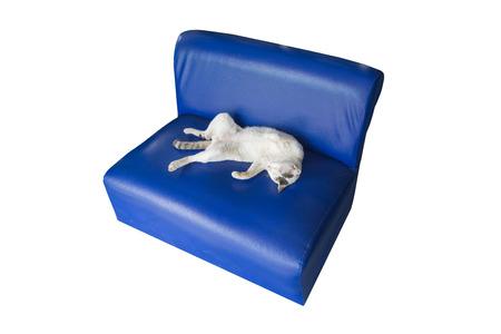 white sofa: Lazy white cat sleeping, lying on dark blue sofa. Stock Photo
