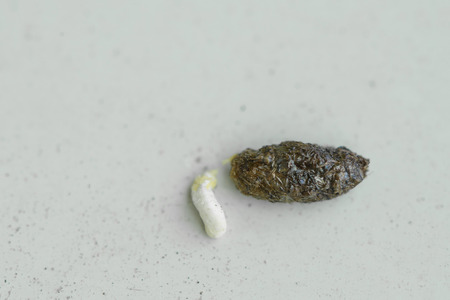 closeup of House lizard feces on the white floor Stock Photo
