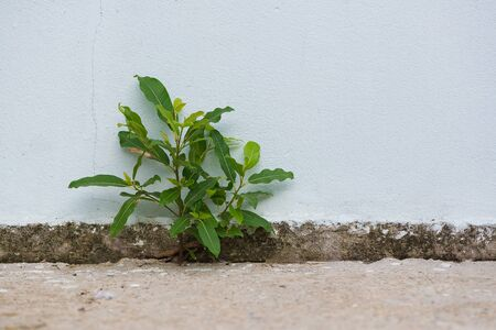Small plant germinated and grown up from the cracked concrete wall background. Stock Photo