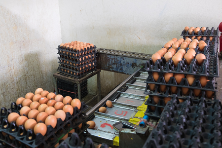 size distribution: Eggs from hen farm in package and old weight scales machine for screening size. small factory.