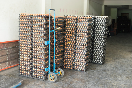 mass storage: Eggs from hen farm in the package that preserved for sale in wholesale market. Stock Photo