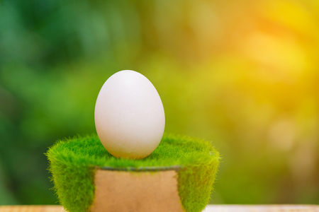 duck egg: White egg from duck farm on artificial grass in pot, on wooden table with green nature background. shallow focus. soft tone.