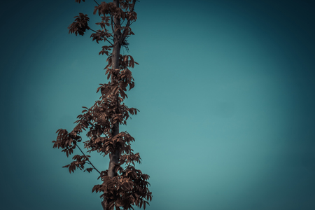 Landscape photo of the sky above the tops of a clump of trees in the forest. vintage tone