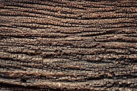 Tree bark texture background. natural surface.