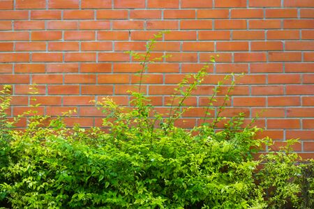 Red brick wall fragment background, texture. or brick layer building with green plant.