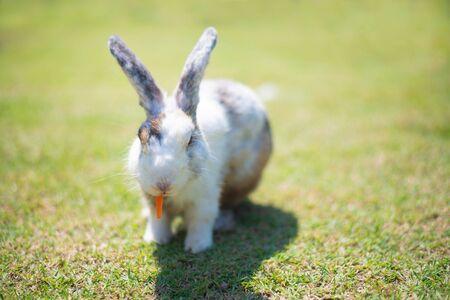 Little rabbit on green grass field in summer day. Stok Fotoğraf