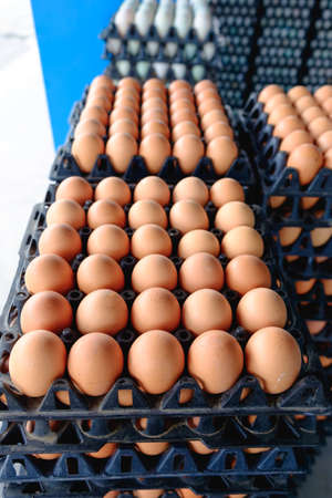 Eggs from hen farm in the package that preserved for sale in wholesale market. Imagens