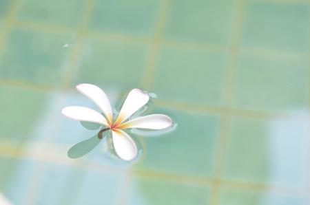 Leelawadee in water